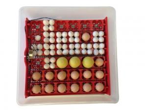 Factory-supply-small-egg-incubator-incubator-72
